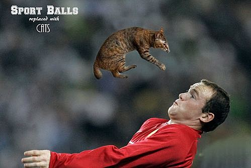 Sports Balls Replaced With Cats 4