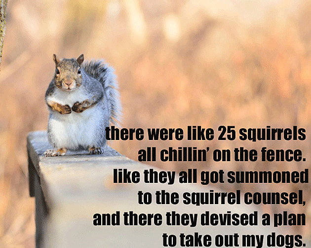 Squirrel Council