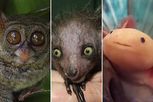 15 Cutest Weird Animals Around | OLINGUITO  |Weird Cute Animals