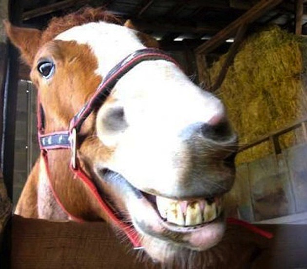 animalsthatsmile tumblr 10 smiling horses guaranteed to make you smile, too