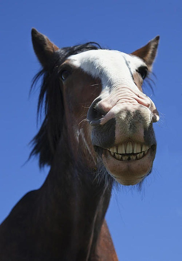 Smiling Horses