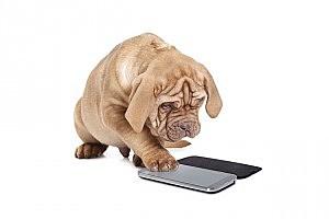 Texting Dog
